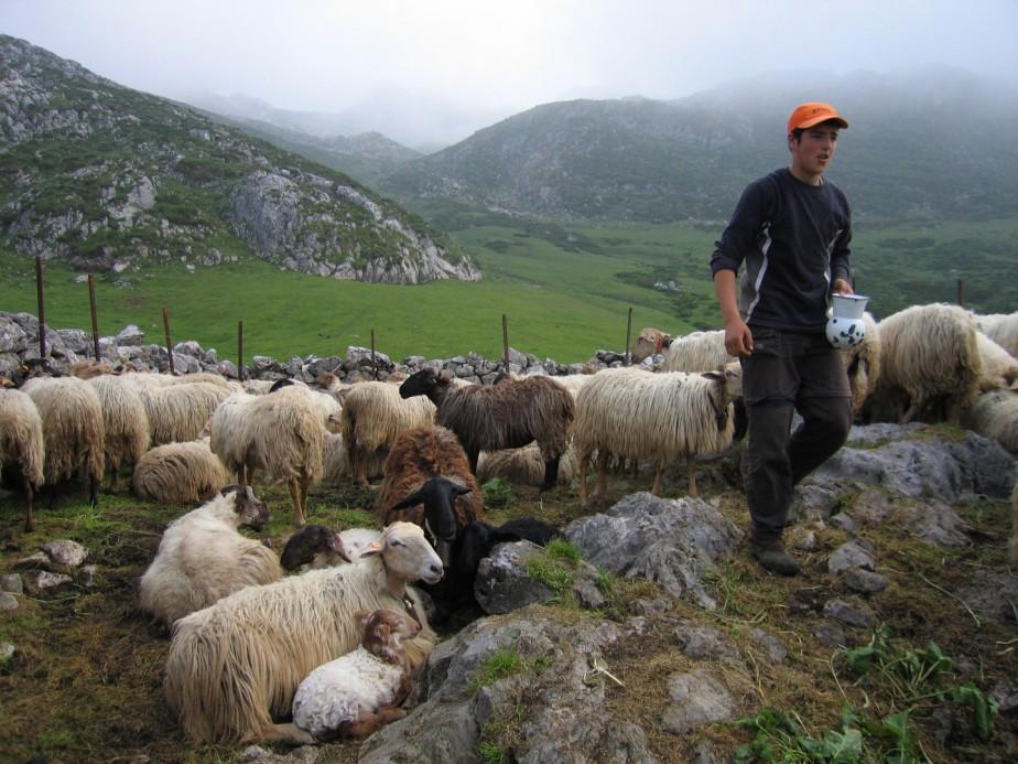 Photo 2 pastores-de-la_niebla2